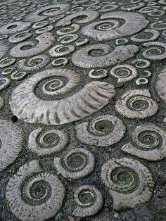 Ammonite pavement in Lyme Regis, Dorset, Great Britain - a World Heritage site