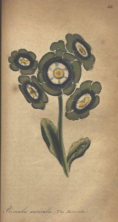 The illustrated botany v.2.   New York :J.K. Wellman,1846-1847. Biodiversitylibrary. Biodivlibrary. BHL. Biodiversity Heritage Library.