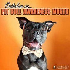pit bull awareness month!