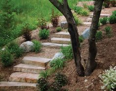 Stone Steps - Lanscape Design, Backyard Makeover