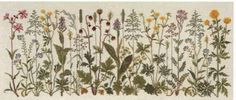 'Flowers of the Meadow' cross stitch kit by Gerda Bengtsson (Danish Handcraft Guild). She has so many beautiful botanical cross stitch #embroidery designs.
