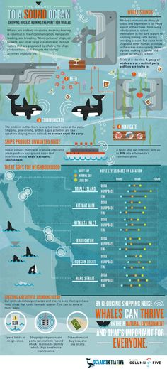 Very cool infographics on the secret to the ocean sound, and why a quiet ocean is important!