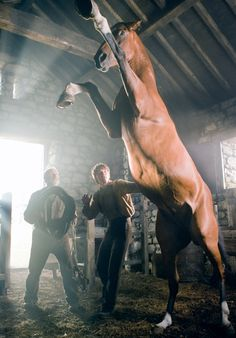 The Movie...War Horse. This horse is the star of the movie.