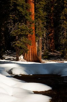 Sequoia National Park; photo by Crest Pictures