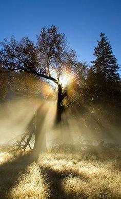 nation park, tree, sunris, national parks, light