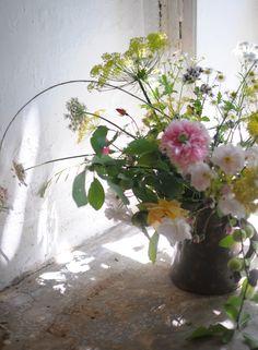 Pink Garden Roses + Poppies - frolic!