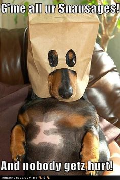 Funny Dog Pictures haha!
