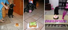 #Labrador Birthdays Are the Best | It's a Lab Thingg