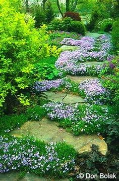 Great ground cover.