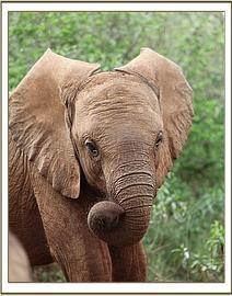 Ishanga curling her trunk