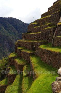 #Inca terraces in Machu Picchu