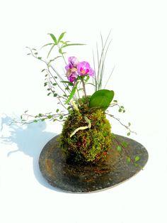 Orchid kokedama arrangement