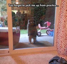 Poor Raccoon