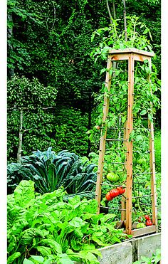A really nice trellis idea for growing tomatoes -this gardener made the trellis with removable wooden dowels in this open tower. As the tomato plants grow, a dowel is pulled partially out to allow you to weave the shoots back in without damage (no real diy for it in the article)