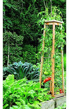 nice tomato trellis idea. DIY tomato pruning and trellis ideas