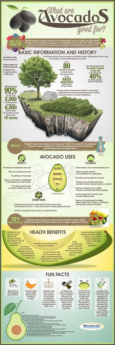 "Discover avocado's uses and benefits through ""The Amazing Avocado: Facts About This Fruit"" infographic, and learn why this food should be part of your diet. http://www.mercola.com/infographics/avocado-uses-health-benefits.htm"