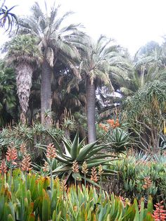 View of Aloe garden | Flickr - Photo Sharing!