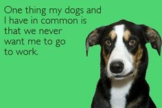 What why dog and I have in common.