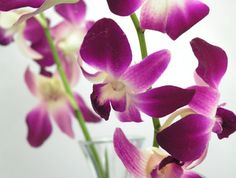 Pink Orchids looks perfect for pink color wedding theme...