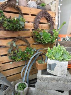 "Succulent Wreaths from Urban Farmgirls// """" I need to get some grapevine wreaths """""