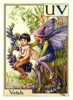 mari barker, cice mari, vintage prints, alphabet, vetch, flowers, flower fairies, cicely mary barker, the roots