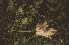 leaves for the fairies# Flickr photo