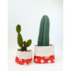 cactus buckets