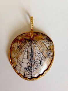 Cathy Waterman fossil sand dollar, 18k gold and diamond pendant