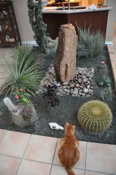 Cactus rock garden on pinterest cacti garden succulents for Indoor gardening with cats