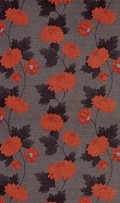 Wilde Chrysanthemum