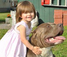 Pitbull and child 2
