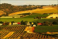 Barossa Valley, SA