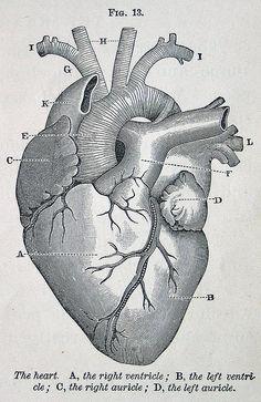 #love heart