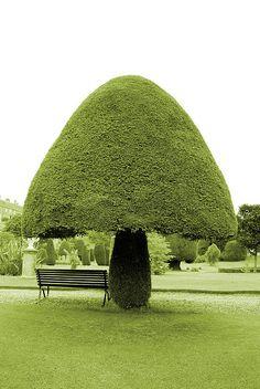 mushroom tree.