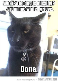 Oh, the irony of his tag...lol  #cat #humor