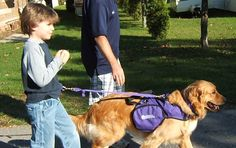 Certified Service Dogs for Autism | National Service Dogs
