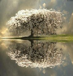 pictur, art, natur, trees, beauti, place, reflect, thing, photographi