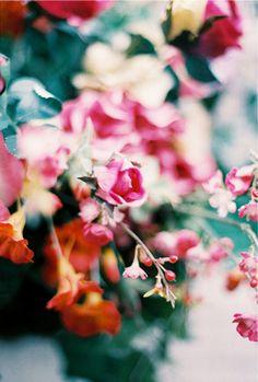 beautiful colors // floral // great bokeh