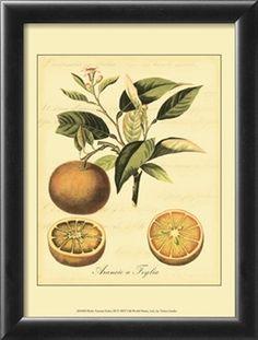 "one of many ""Tuscan fruit"" prints on art.com"