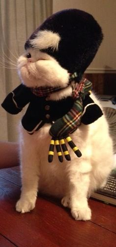 Scottish Kitteh will now play a bagpipe solo...