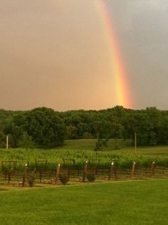 A beautiful view at one of NC's Yadkin Valley vineyards.     Photo Credit: Brandon Hills Vineyard