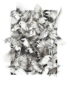 Illustrations by Teagan White   the dancing rest