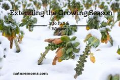 Extend the Growing Season Into Fall & Winter