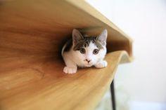 Рабочий стол для котов