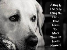 this is why i have dogs and not kids :) anim, dogs, pet, doggi, true, puppi, quot, friend, thing