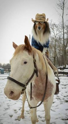 A dog wearing clothes and riding a horse is sure to brighten your day.