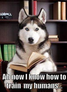 Educated dog