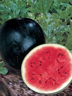 Watermelon, Sugar Baby - Watermelon at Cooksgarden.com (15 seeds-$3.95)