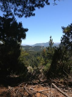 Skyline Nature Trail around Jack's Peak is a scenic place to hike near Monterey