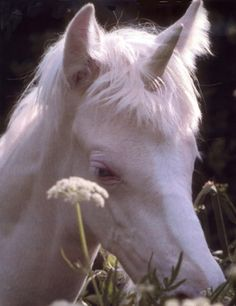 robert vavra Unicorn